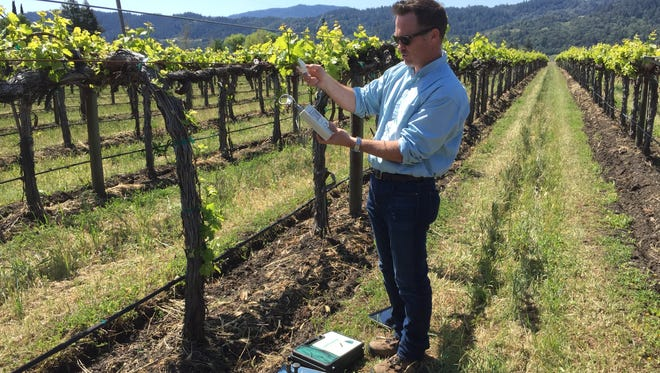 Toby Halkovich, who directs vineyard operations at Cakebread Cellars in Napa, uses a handheld device to detect precise moisture levels in grape leaves. The bulky old tech for the same job is at his feet.