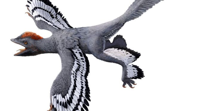 An artist's conception of the bird-like feathered dinosaur Anchiornis.