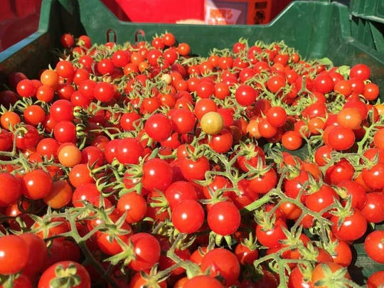Tomatoes - like these from Harvest Moon Organic Farm in Hillsborough - will blanket farmers markets this summer.