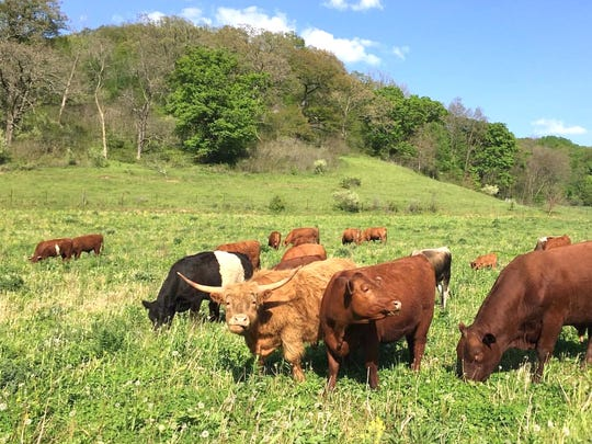 Mastodon Valley Farm regenerates soil and removes carbon from the atmosphere by imitating nature to manage grazers on pasture. The land had been in conventional cultivation for more than 100 years before Peter Allen and Maureen Carlson Allen took over in 2014.