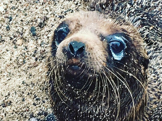 Animals like this cute baby sea lion were prolific