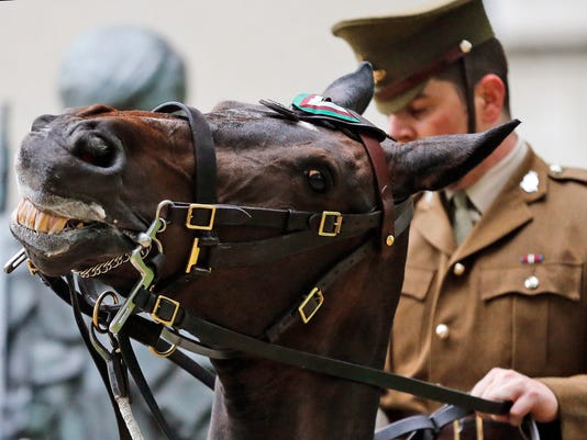 636052055737281859-war-horse1-AP-Britain-PDSA-Dickin-Medal.jpg