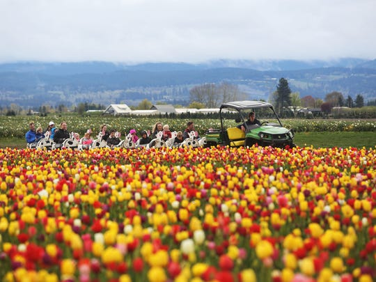 Tulip Festival: Welcome spring March 24 through April 30 at the Wooden Shoe Tulip Farm in Woodburn.