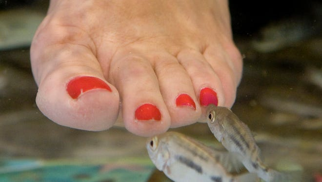A Gilbert salon once featured fish that were used to nibble dead skin off people's feet.