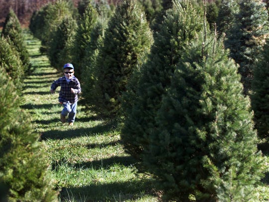 When buying a tree outdoors, be aware that the sky is your ceiling, so what looks small outside may be big indoors.