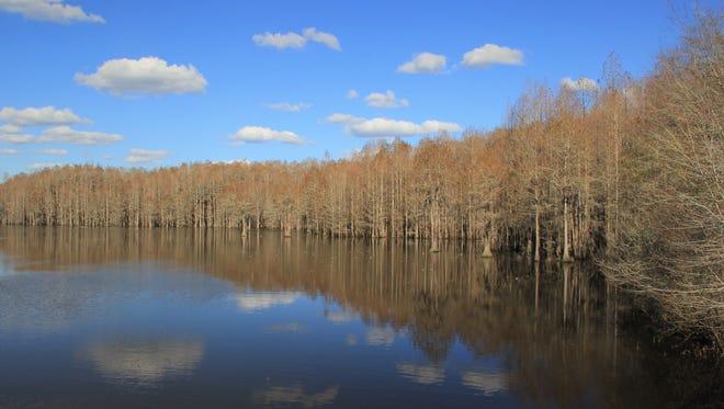 Sneads Smokehouse Lake is part of the Aucilla River floodplain.