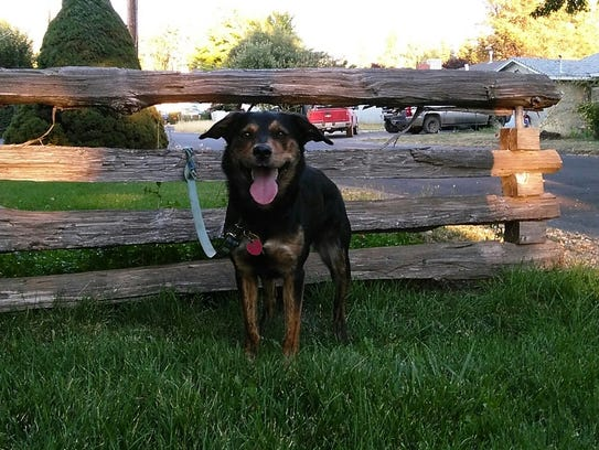 Happy Girl is a 43-pound spayed, female mixed-breed