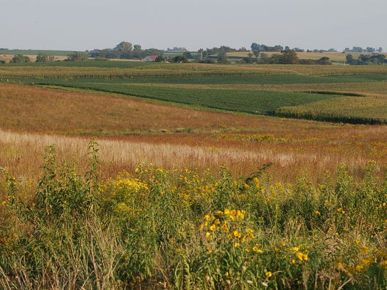 Native prairie strips are used to reduce the nutrients