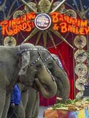 The Ringling Bros. and Barnum & Bailey elephants enjoy