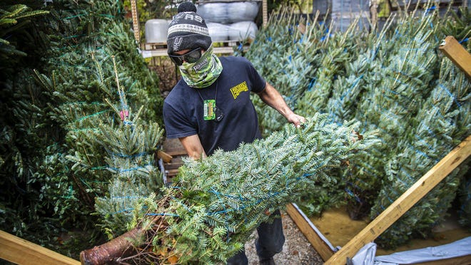 Andrew Campos prepares a Christmas tree for sale at the Great Outdoors nursery on South Congress Avenue.  A new survey of Texas retailers showed many businesses saw sales decline in November.