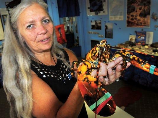 ODD Calico Lobster