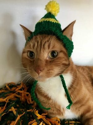 Colleen Sternitzky of Kewaunee knits Packers hats for cats. While the cats aren't always thrilled to wear them, she says their owners can't resist.