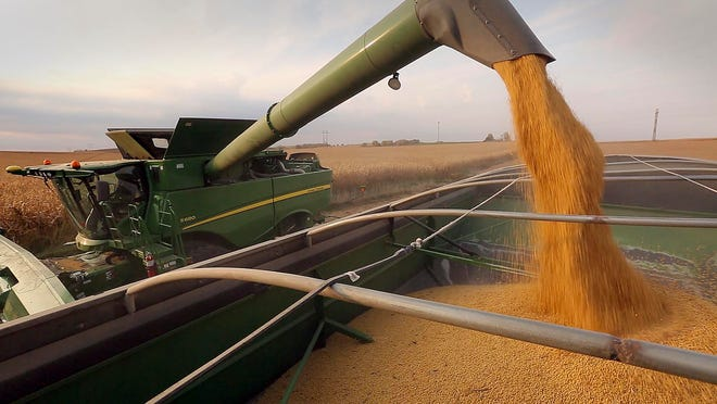 Grant Kimberley, a central Iowa farmer from Maxwell, pours soybeans into a grain wagon while harvesting in October.