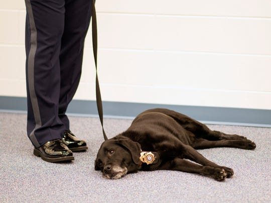 Ten-year-old arson K-9 Sparks relaxes during a news conference in Georgetown.