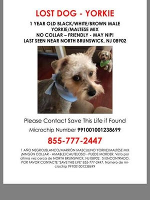 Have you seen this dog who was lost Saturday in North Brunswick? Call 908-868-6769.