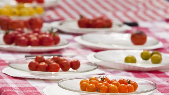 Different varieties of tomatoes sit on a tasting table at the annual Tomato Feastival.