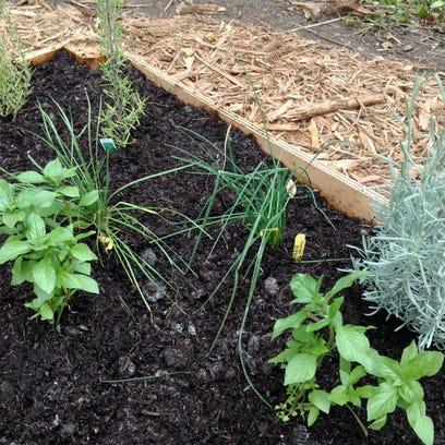 UW-Extension Master Gardeners offer green-thumb help