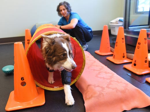 Program helps save the dogs that might save your life