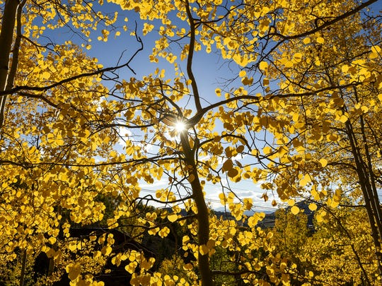 Colorado's fall colors will reach their peak by the end of September.