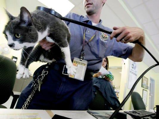 bc-us--pets-lostcats-ref.jpg
