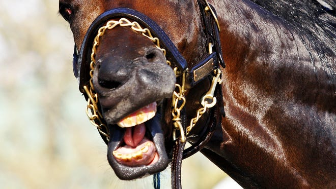 Colonel John, the winner of the Santa Anita Derby, and one of the favorites for the Kentucky Derby, seemed to laugh at the competition after a morning bath._Activity is picking up on the backside of Churchill Downs as more Kentucky Derby horses have been shipped into the historic racetrack._(By Bill Luster, The Courier-Journal)_4/23/08