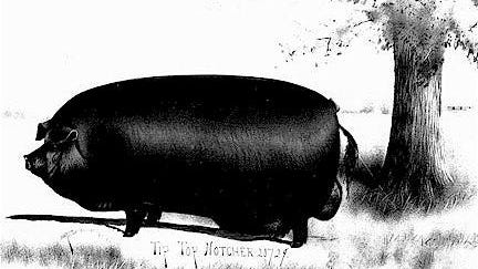 A 1,120 pounds,Tip Top Notcher was named grand champion of the swine competition at the 1904 World's Fair in St. Louis. Born in Brown County, Tip Top Notcher is memorialized by a roadside marker outside Mount Sterling.
