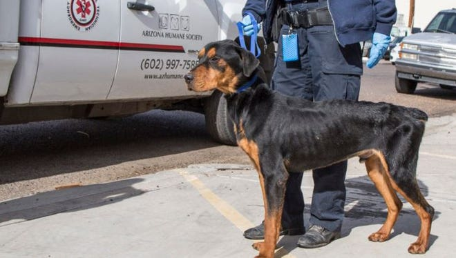 One of 164 animals seized from a pet-boarding facility in Phoenix.