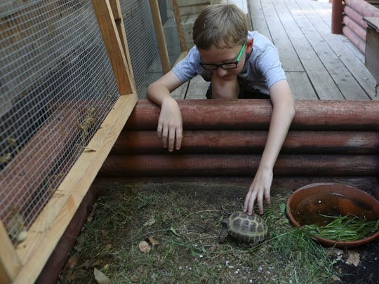 Raleigh Vaughn, 9, pets Shamrock, a Russian male tortoise, on Tuesday during an educational event celebrating World Turtle Day at Tortoise Acres Rescue & Sanctuary in Anderson.