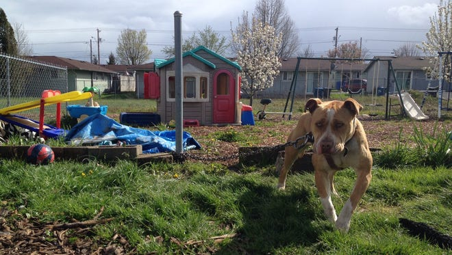 Fences for Fido has helped dogs in the Mid-Valley, like the one pictured, get off their chains by building fences and dog houses. They're looking for Kong toys, dog food, leashes, collars and harnesses to help further their mission.