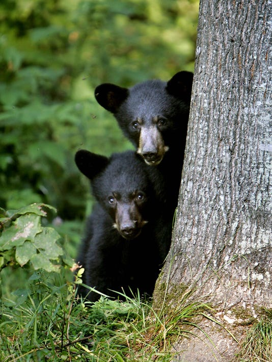 New England Drought Wildlife