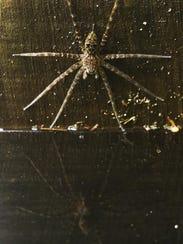 Corkscrew 07