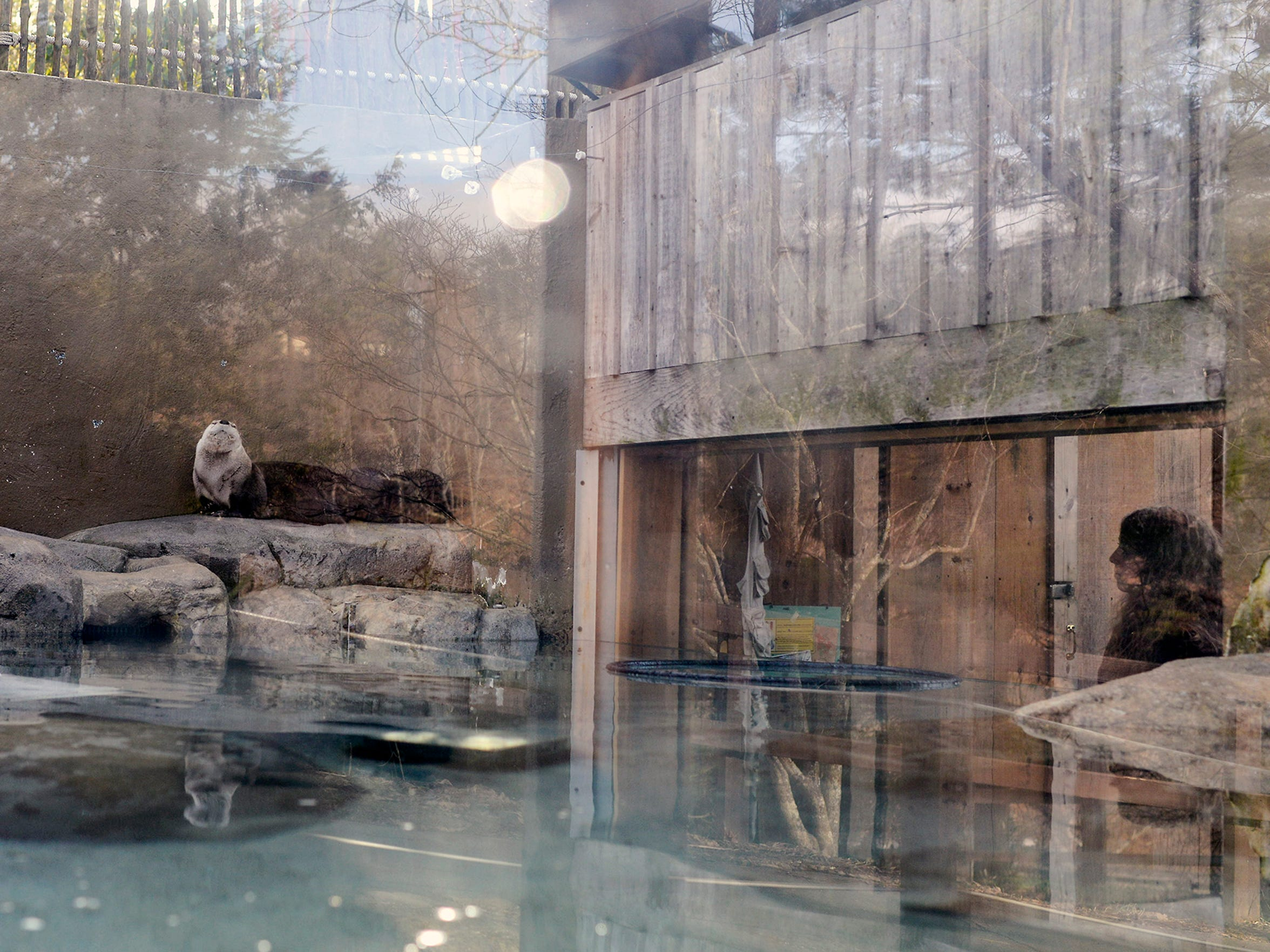 Visitors check out otters Obi Wan and Olive at the