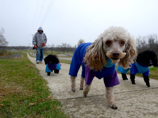 Brenda Leonard, 60, walks her three dogs - King Louie, front, Tinker Bell, right, and Baloo -  in November near her new apartment in Olivet.