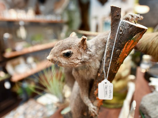 Natural Selection, 39 St. Lawrence Ave. Taxidermy and