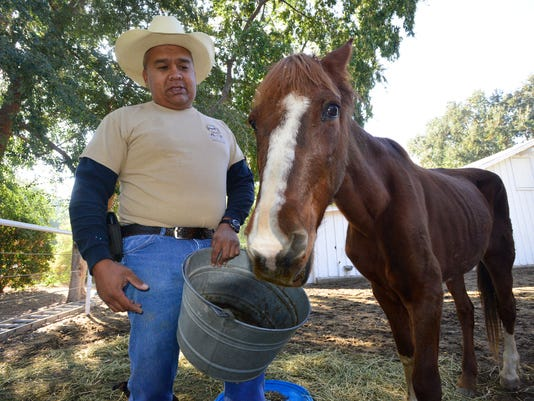 636071258691061248-VTD1115-HorsesDrought-4622A.JPG