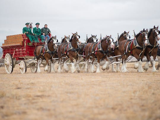 During Purina's A Home for Every Horse, the world-famous Budweiser Clydesdales, helped Purina surprise the shelter and deliver two tons of horse feed.