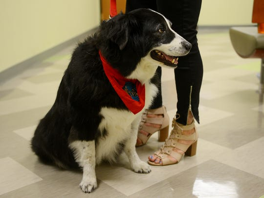 Therapy dog Jack sits next to Judy Winter during the