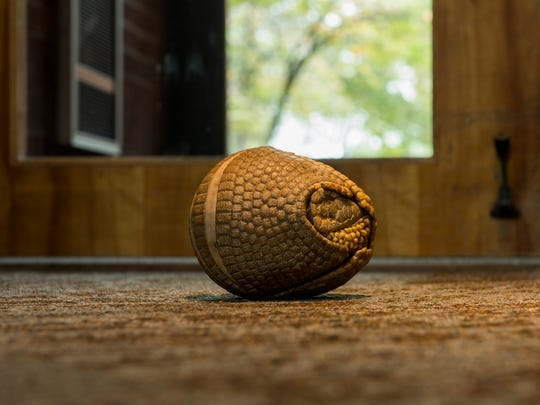 Pele, a three-banded armadillo at the Nashville Zoo, starts to come out of his ball on October 11, 2017.