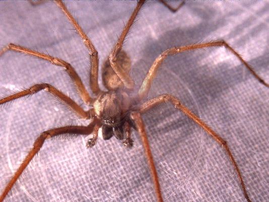 636409944721720248-Spider.jpg