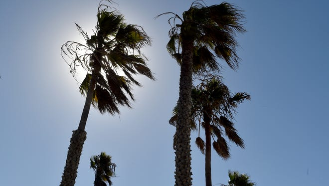 The tops of palm trees sway in the wind at Hueneme Beach on Wednesday.