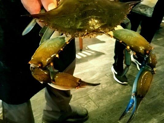 636633807707644433-adjusted-quiet-crab-closeup.jpg