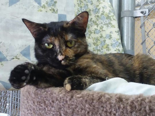 Sabille is available for adoption with Sun Cities 4