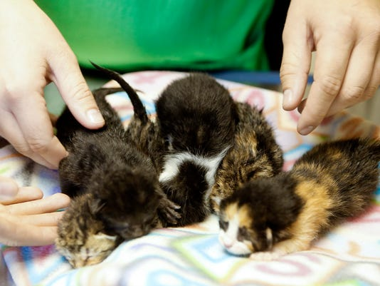 RESCUED KITTENS AT DHA