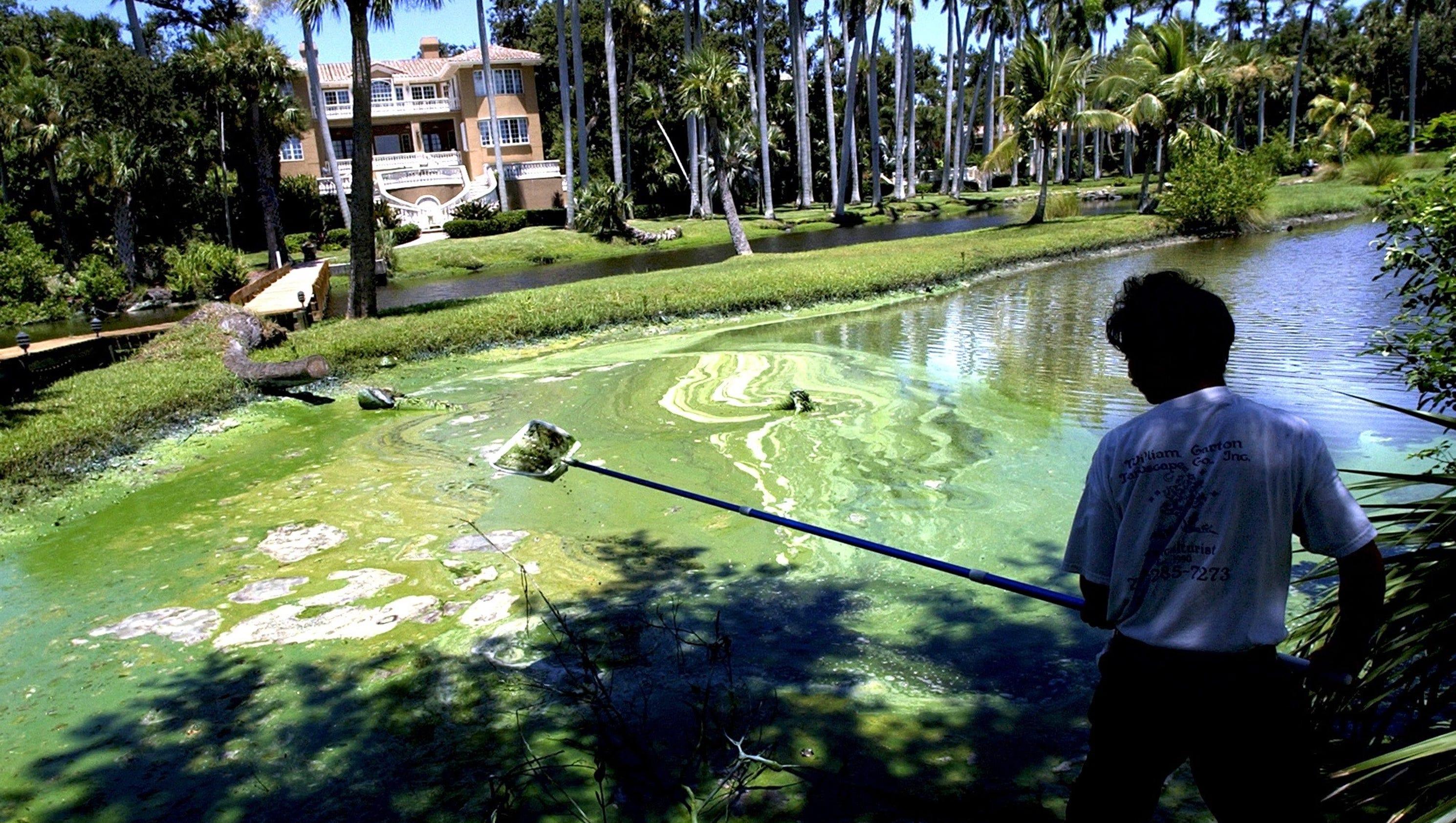 Ohio State University Study Links Toxic Algae Blooms