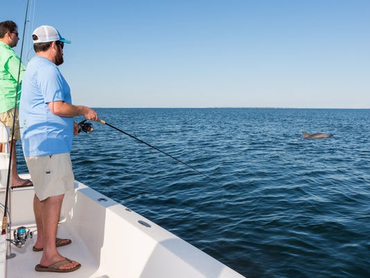 Dolphins and Fishing