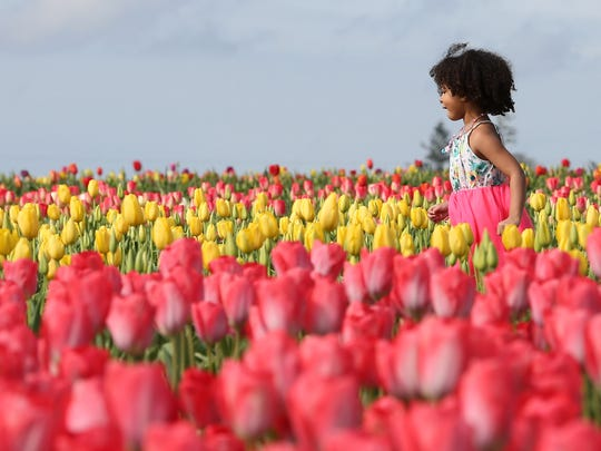 Jubalee Wani, 4, of Salem runs through the tulip fields on Saturday, March 26, 2016, at the Wooden Shoe Tulip Fest in Woodburn, Ore.