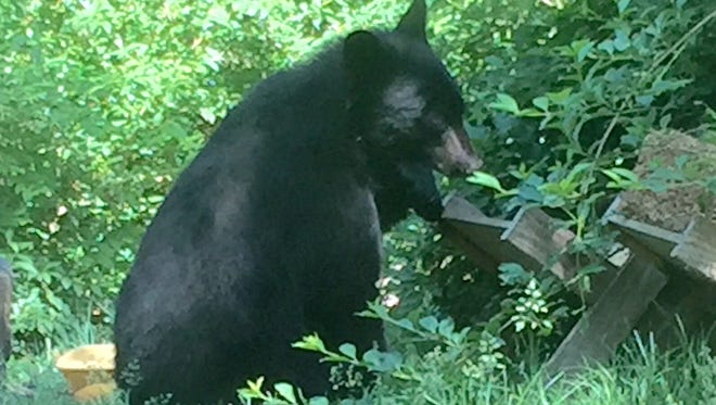 A bear in a LaGrange backyard on Hillcrest Drive.