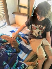 Brayden Couch comforts a newborn elk on the way to