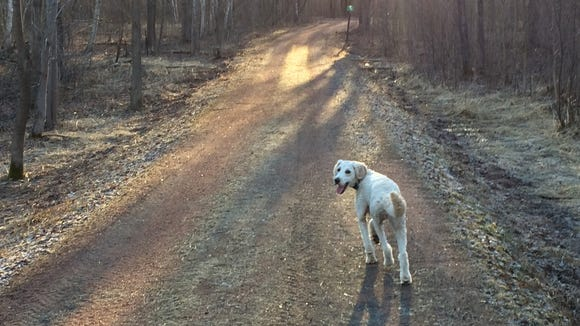 Henry waits for me to catch up on a recent trail run.