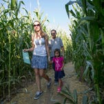 Susan, Lola, and Alan Wong of Phoenix navigate their way through the corn maze during the Pumpkin Days and Corn Maze festival at Tolmachoff Farmsin Glendale, Ariz. Tolmachoff Farms has embraced agritourism, attracting visitors with fresh produce and other activities at the four-generation family farm.